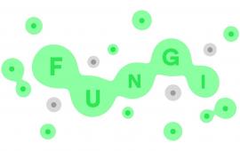 Let's Play Fungi: een Nederlandse browser game vol met puntjes